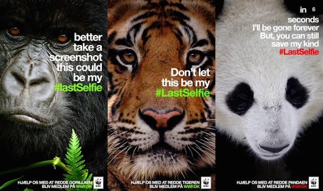 WWF Last Selfie