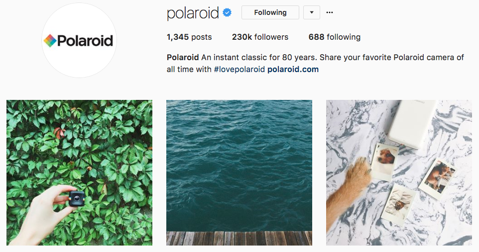 polaroid instagram bio example