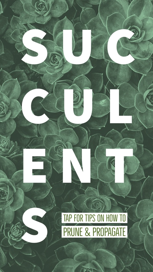 Succulents Adobe Spark Template