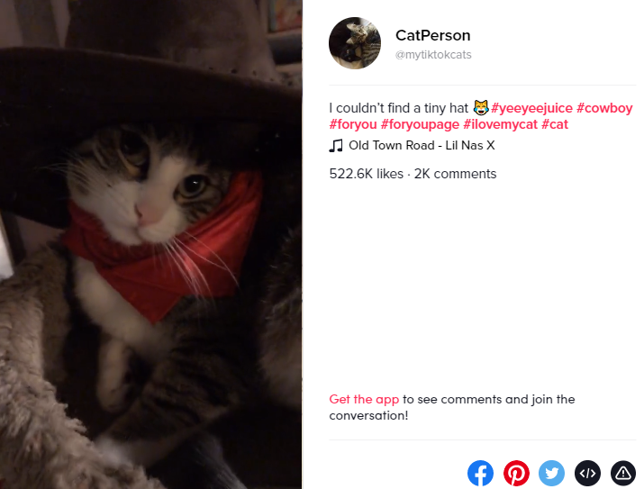 tiktok post with a cat participating in the old town road challenge