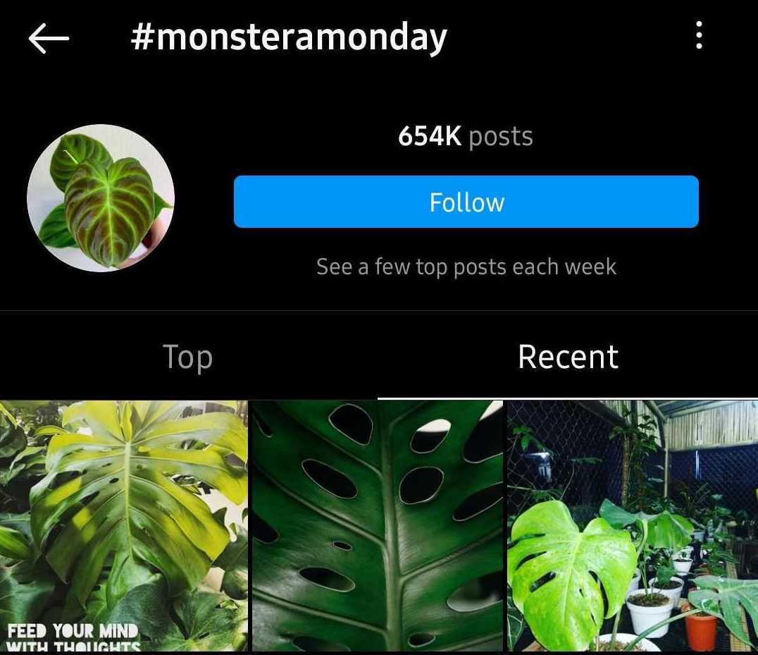monstera monday hashtag on instagram