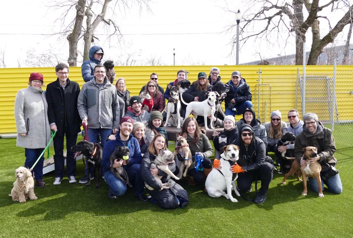 Sprout Social employees with their dogs